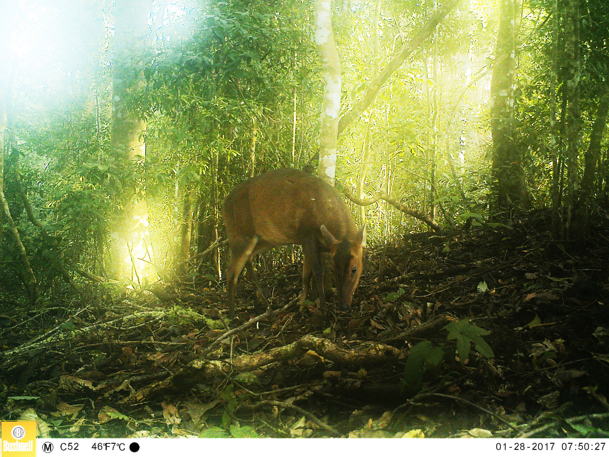 updates the saola working group